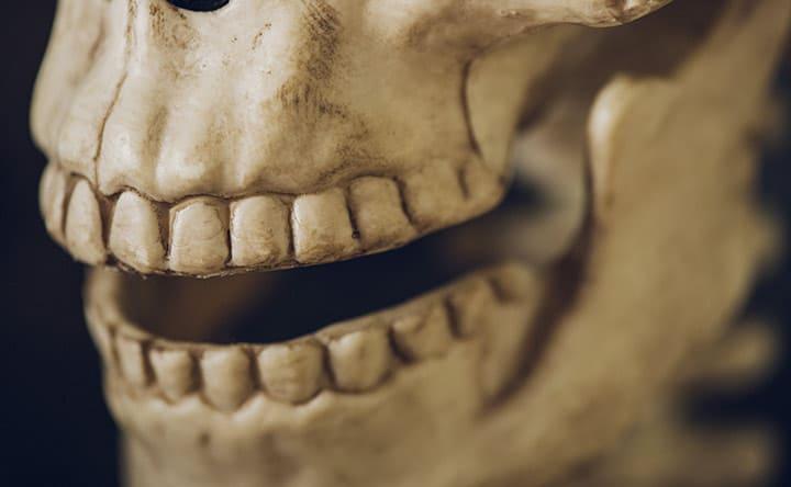 La vita segreta dei denti: il modello dello sviluppo dei denti